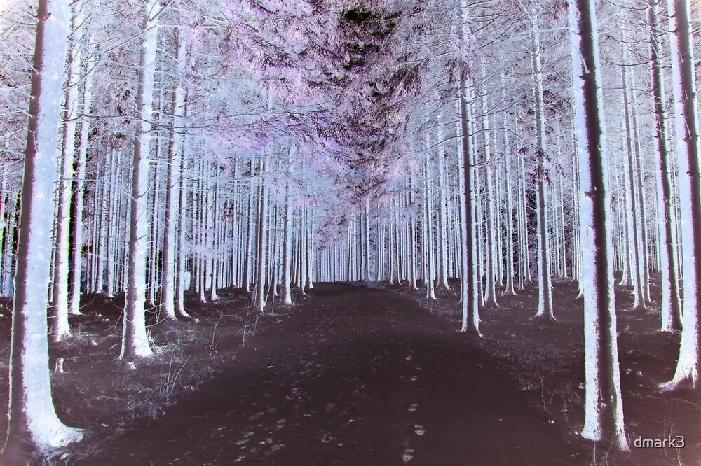 Enchanted Walk by dmark3