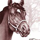 Stare of the Stallion 2 - Sound Reason (Can) by Patricia Howitt
