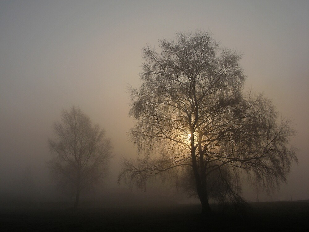 Misty morning by Trine