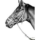 Sir Alfred - Racehorse : Graphite by Patricia Howitt