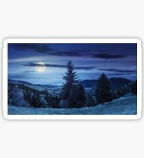 coniferous forest  in mountain at night Sticker