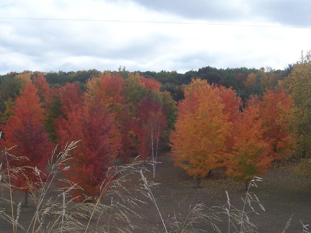 Michigan Fall by revdrrenee