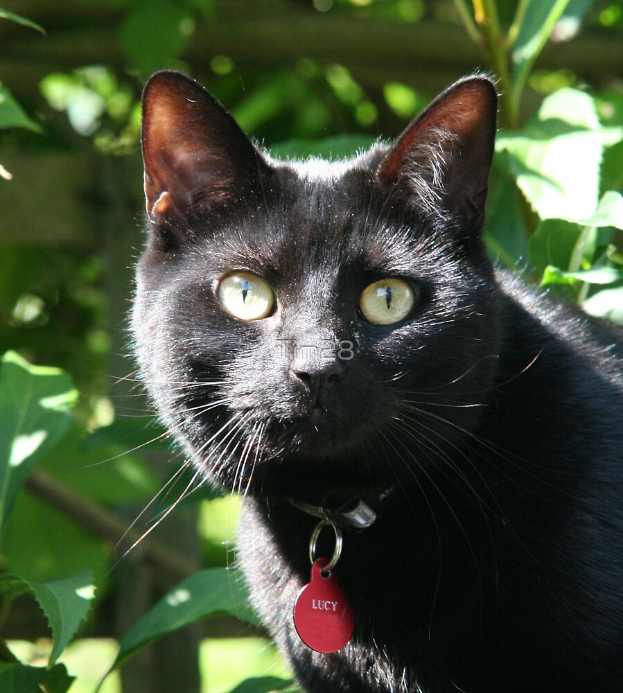 My Cat by Tim28
