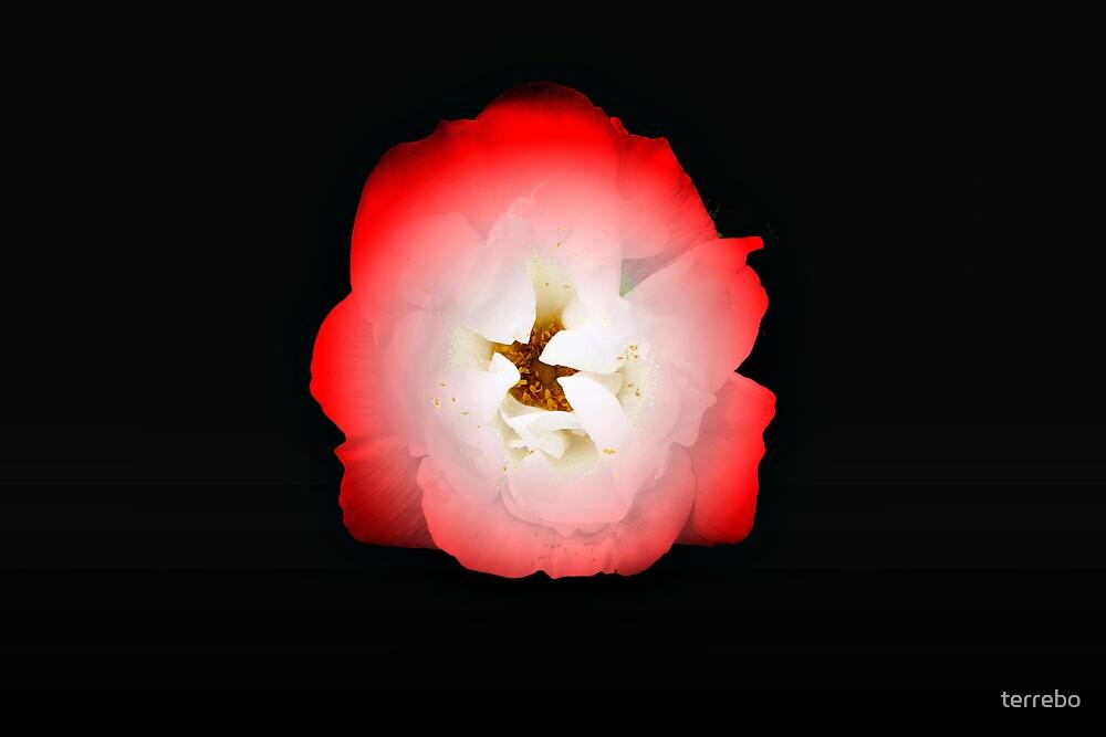 red flower by terrebo