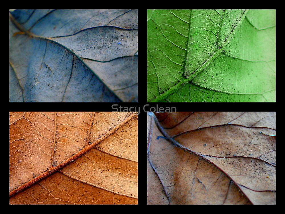 FALL COLLAGE by Stacy Colean