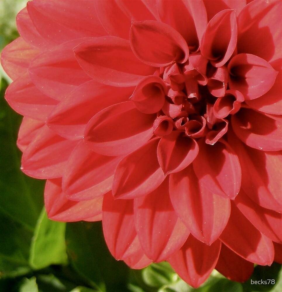Red flower by becks78