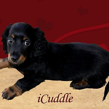 Fun iCuddle Long Hair Dachsund by Shana1065