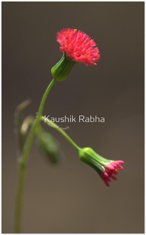 Wild Flower by Kaushik Rabha