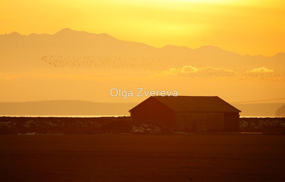 Orange Sunset by Olga Zvereva