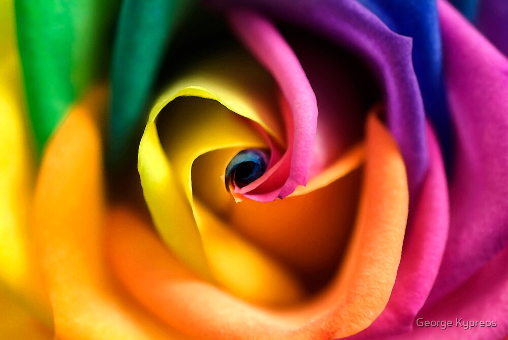 The Hybridic Rose by George Kypreos