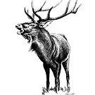 Red Stag Roaring 1 by Patricia Howitt