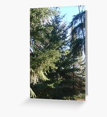 Coniferous Evergreen Greeting Card