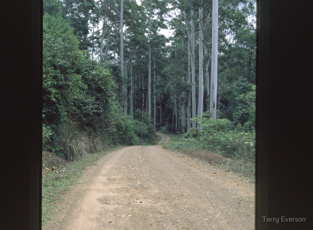 Road beneath the Tall Timber by Terry Everson