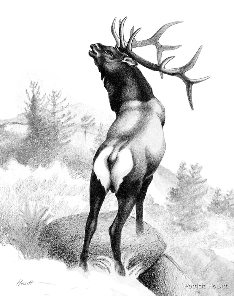 The Angry Elk - B/W by Patricia Howitt