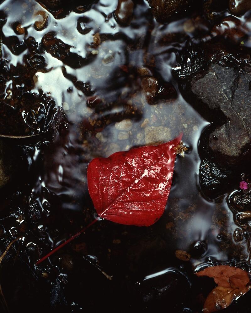 Leaf-Bleeding Heart Tree by ritz