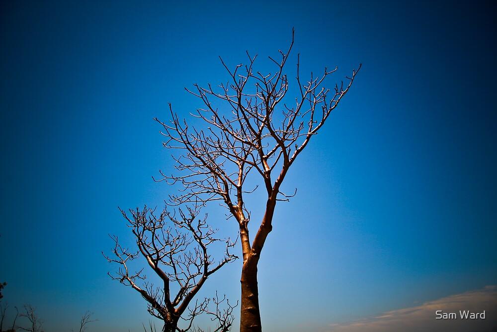 Boab Tree by Sam Ward