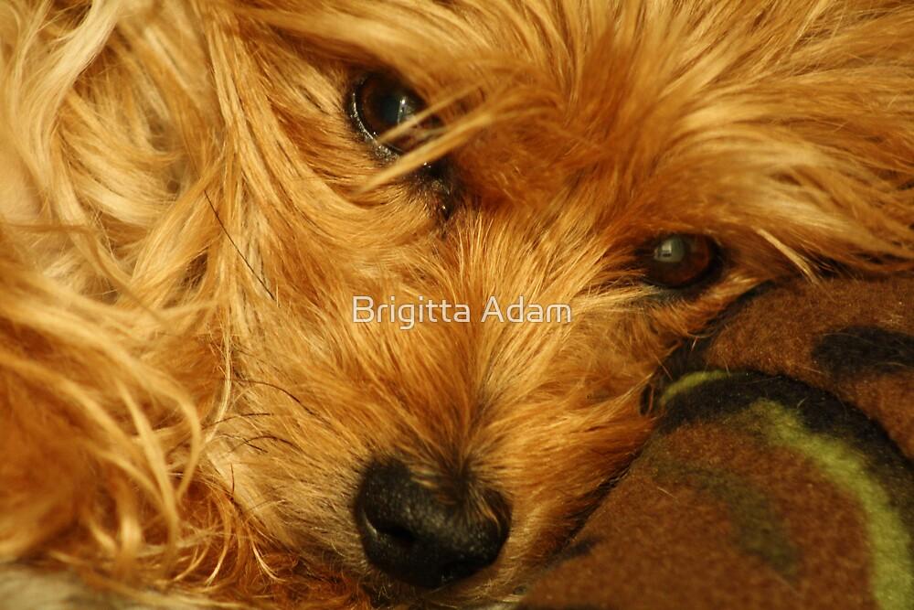 Sleepy by Brigitta Adam