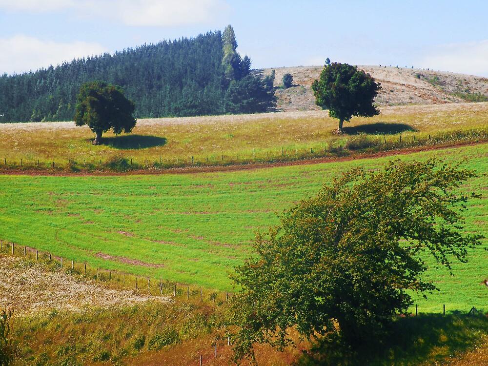 Paisaje rural Sur de Chile. by cieloverde