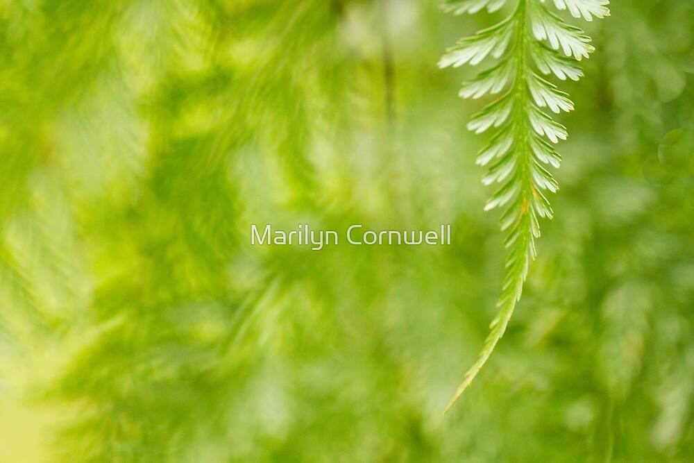 Tropical Fern by Marilyn Cornwell