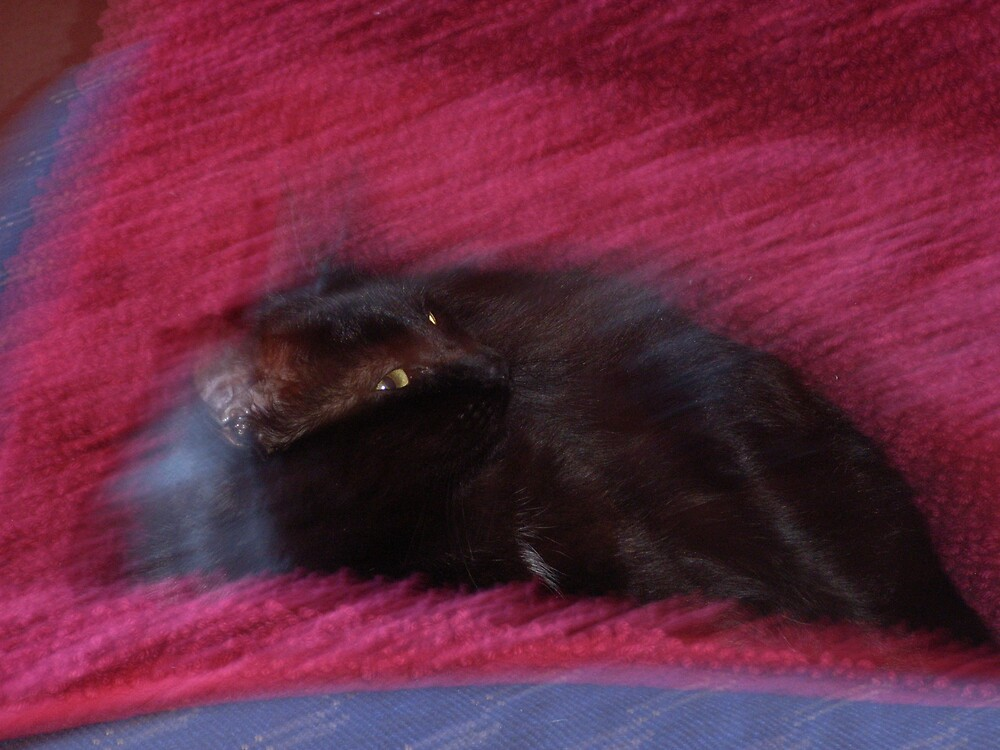 Blur Cat by Guy Martin