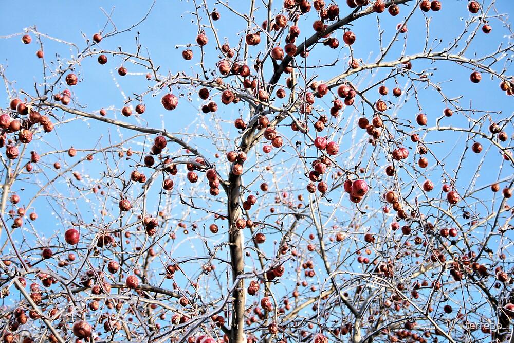 Winter Apple Tree by terrebo