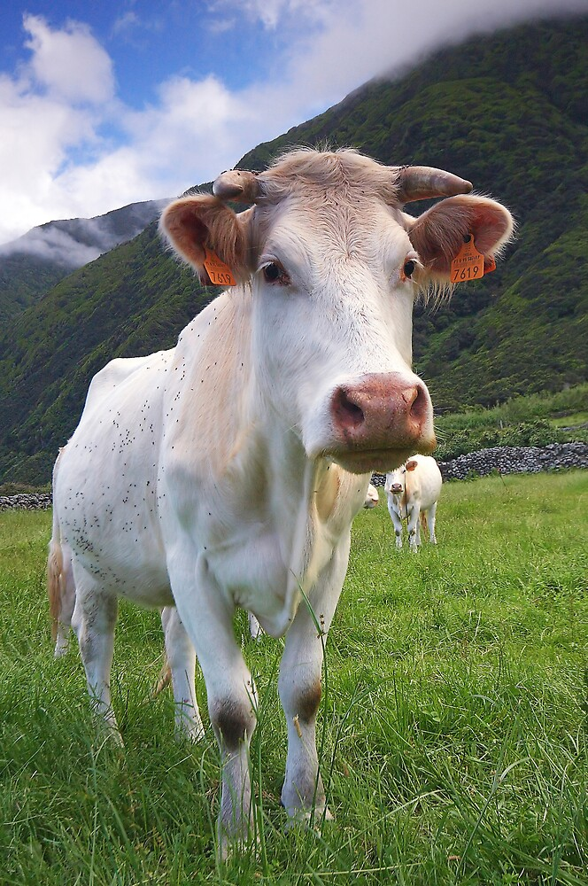 Cow by Filipe Lopes