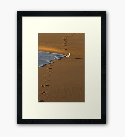 Seagull And Footprints Framed Print