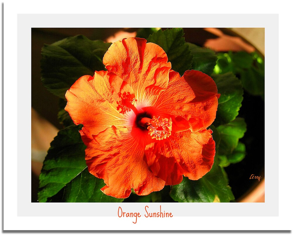 Orange Sunshine by Terry Temple