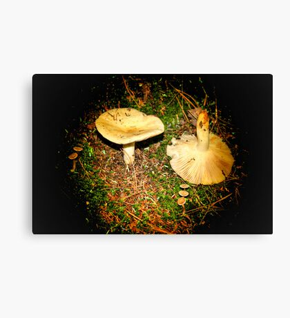 Mushroom In Light Canvas Print