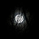 Moon in Trees by Mary Ann Reilly