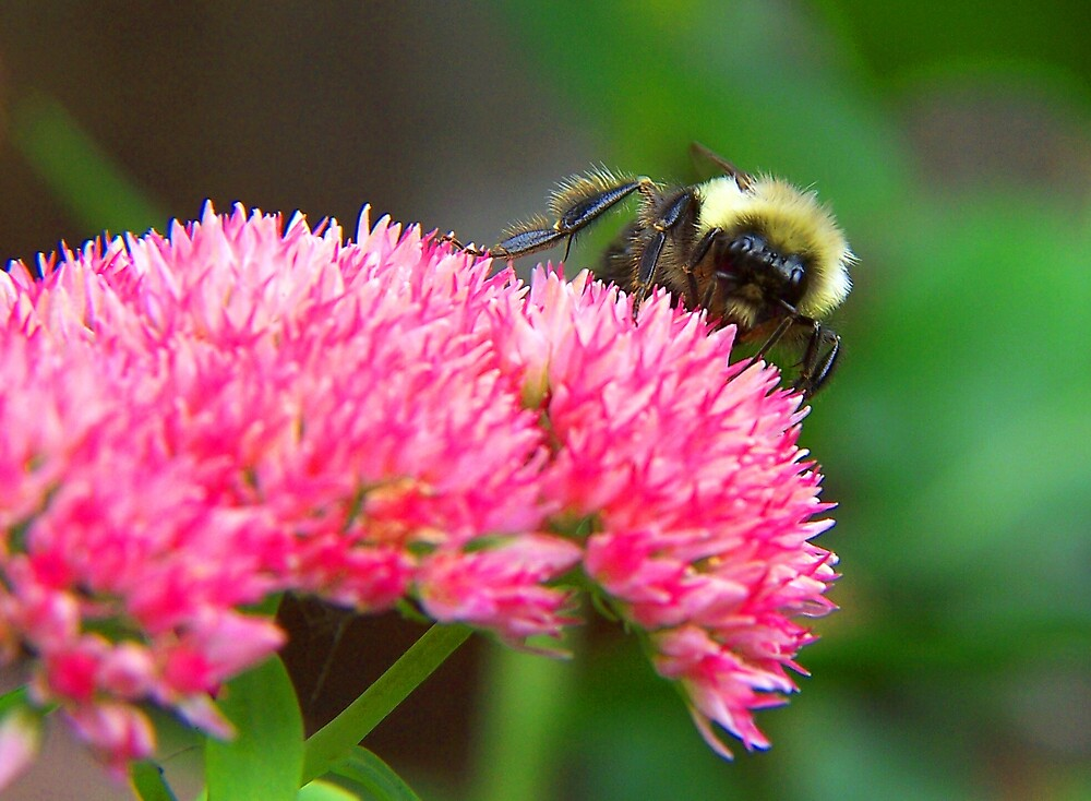 Pollination by madmac57
