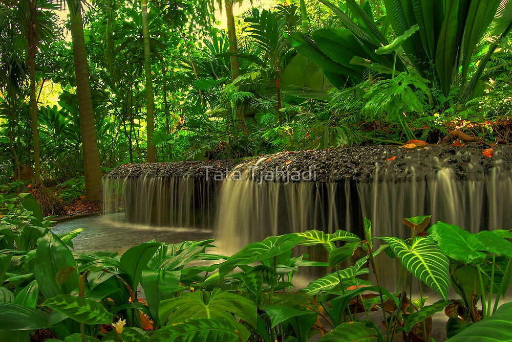 My Dream Garden by Tata Tjahjadi