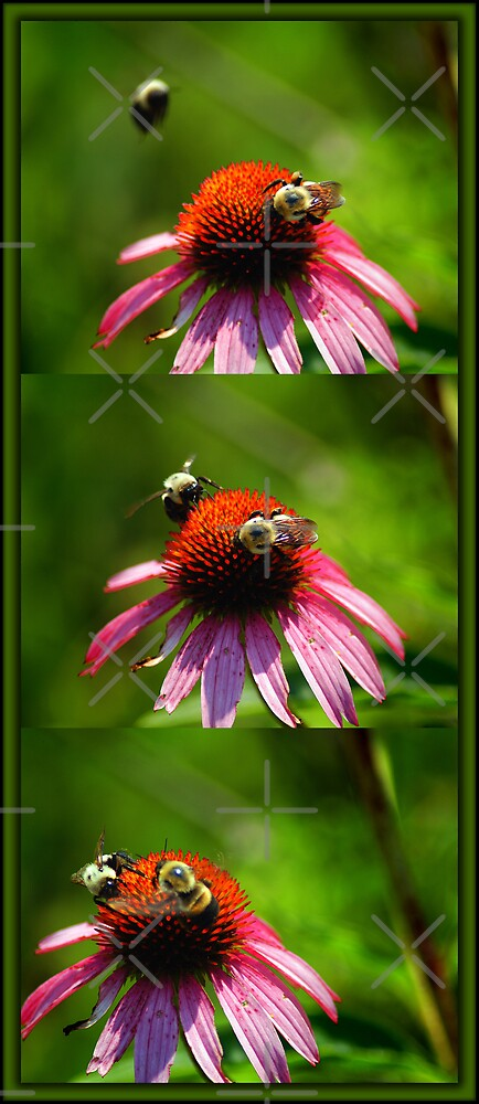 Bees by Clayton Bruster
