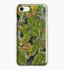 Alligator Holly iPhone Case/Skin