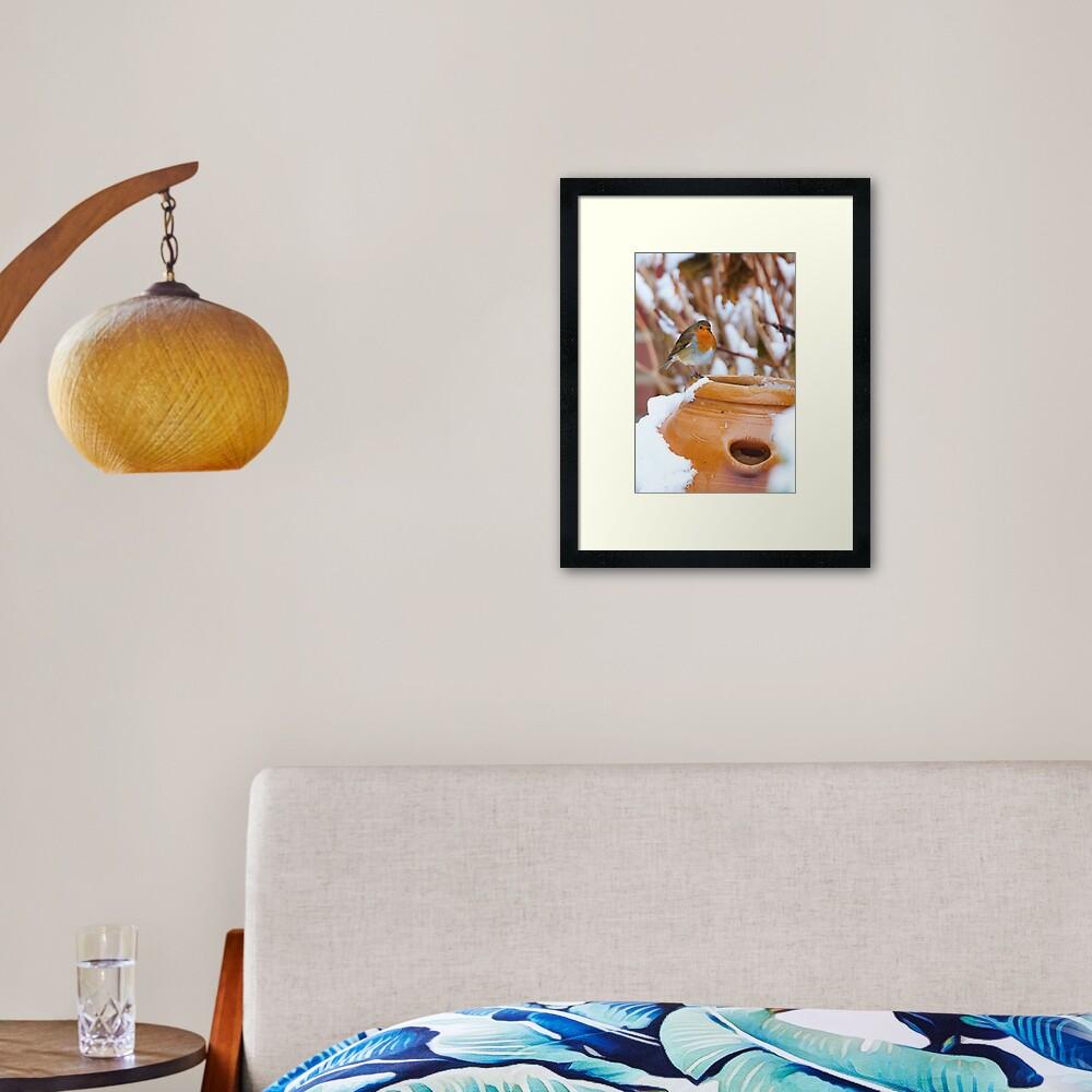 Robin (Erithacus rubecula) Framed Art Print