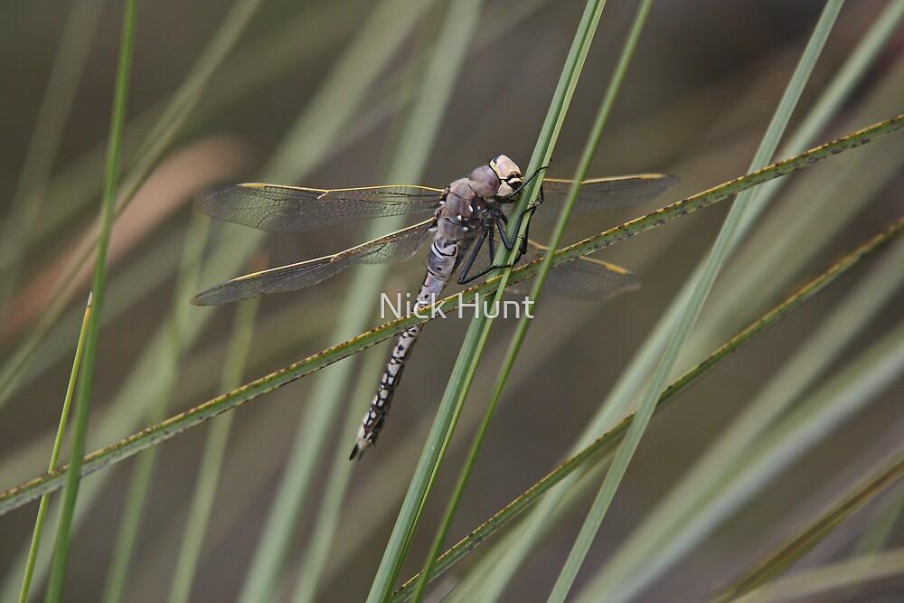 Flying dragon by Nick Hunt