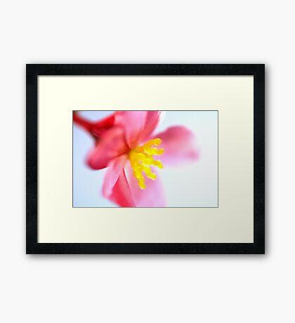 Begonia #2 Framed Print