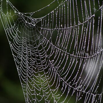 morning dew on the spiders web by assh0le