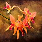 Orchid - Laelia - It's showtime by Michael Savad