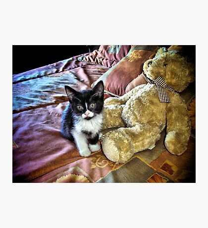 Teddy Cat In Bed Photographic Print
