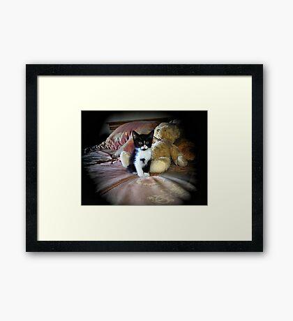 My Teddy Cat Framed Print