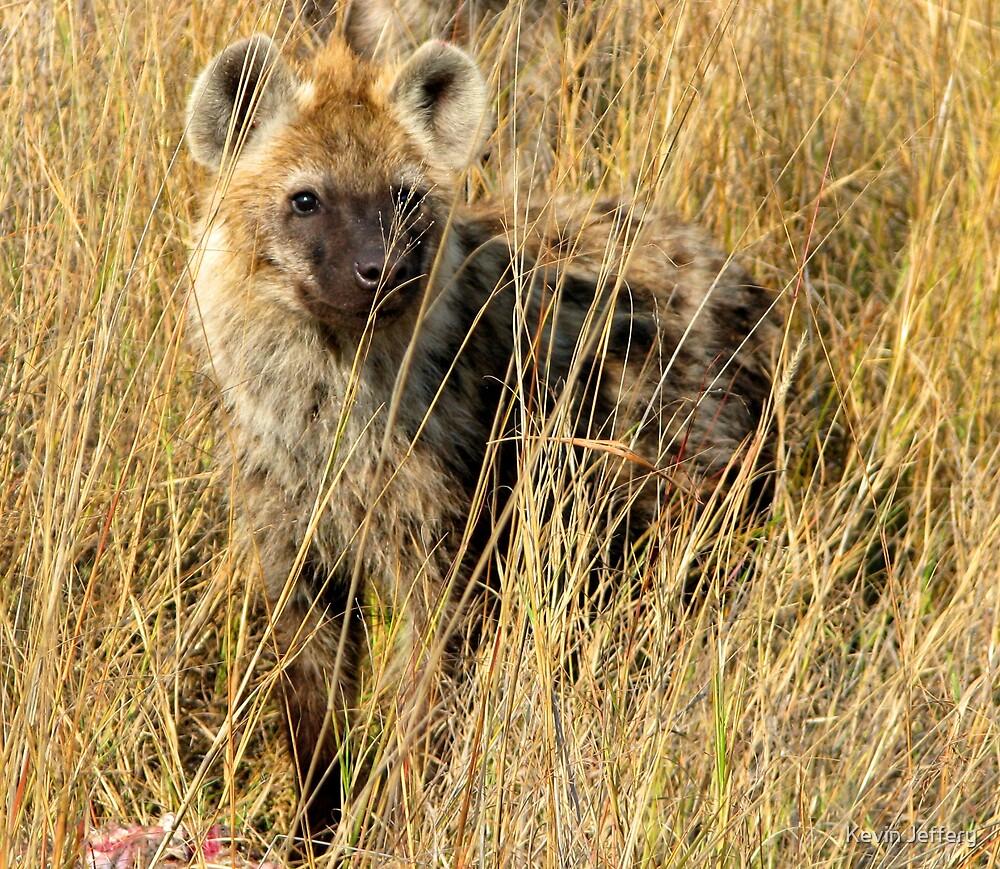 Hyena by Kevin Jeffery