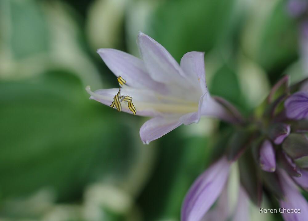 Hosta Bloom by Karen Checca
