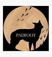 Padfoot Photographic Print