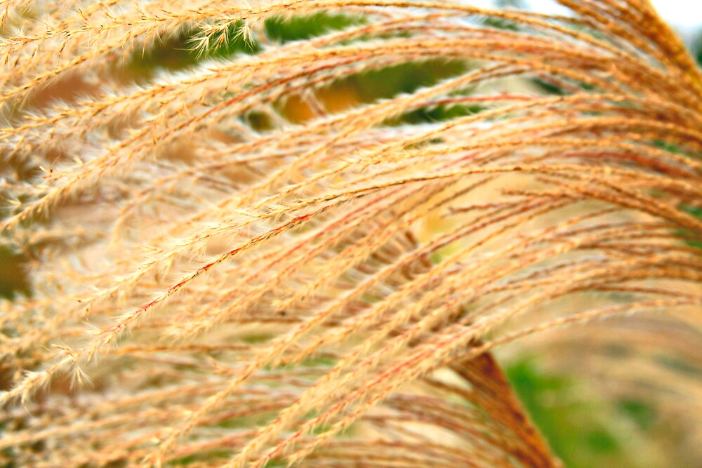 Wild Grass in Abstract by Jeff Harris