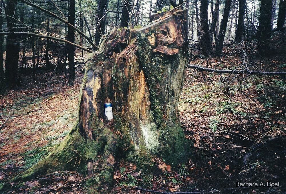 Stumpy by Barbara A. Boal