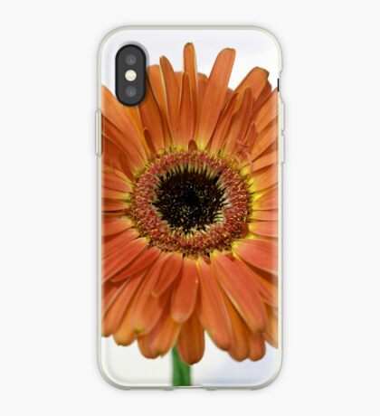 Daisy at Rest iPhone Case