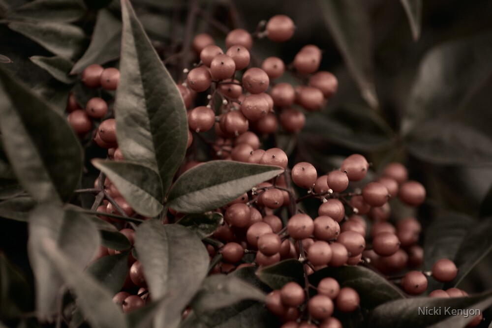 Berries through vintage filter by Nicki Kenyon