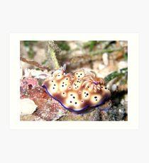 Nudibranch Art Print