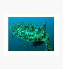 Green turtle shell Art Print